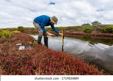 Scientist measuring water depth to install water level data loggers in a coastal wetland  to understand inundation period and impact on ecosystem services.