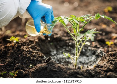 Scientist or microbiologist adds fertilizer to the soil . The concept of soil quality and farming