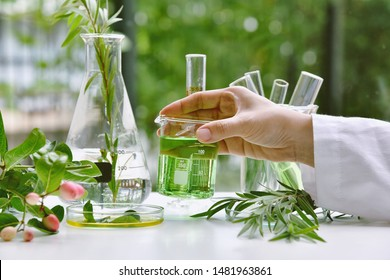 Scientist with natural drug research, Natural organic and scientific extraction in glassware, Alternative green herb medicine, Natural skin care beauty products, Laboratory and development concept. - Shutterstock ID 1481963861
