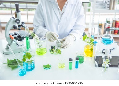 Scientist or pharmacist make herbal medicine from herb in the laboratory on the table show hand with the bottle container.