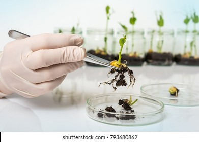 Scientist testing GMO plant in laboratory - biotechnology and GMO concept