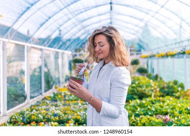 Scientist treating a plant with chemicals. Female working on botany. Photo of Biologist pouring liquid into seedling. Genetic modification. Biologist testing growth