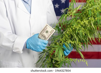 A scientist wearing gloves holding cannabis tree and US banknote against the background of the United States flag. Commercial cannabis medicine higher value and trade profit up trends.