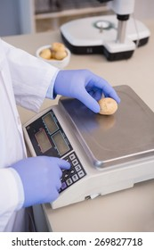 Scientist weighing potatoes in the laboratory