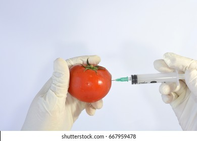 Scientist with white gloves using a syringe to take samples or inject a red tomato
