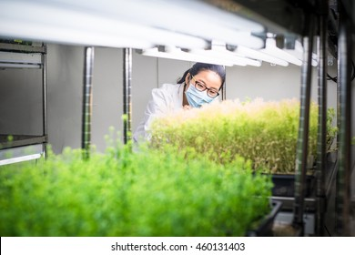 Scientist working in the plant growth chamber