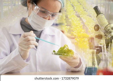 Scientist or young female chemists test vegetables in vitro to research in laboratory,concept development of future food, medicine and cosmetic for safety of consumers before released in market.