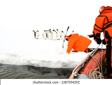 Scientists approaching to a group of emperor penguins by an inflatable boat