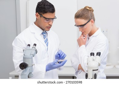 Scientists examining petri dish in the laboratory