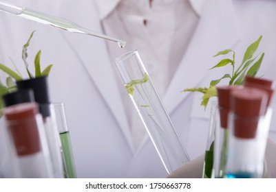 Scientists experiment with aquatic plants and chemical absorption in water sources And the impact on water plants in water bodies
