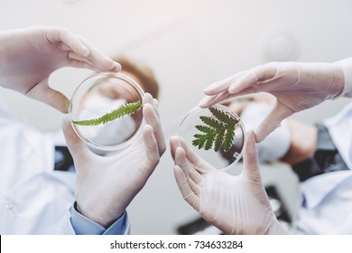 Scientists in laboratory. Young female researcher and her senior supervisor are doing investigations with Petri dish. Genetic engineering. Making biological discovering. Biochemistry, biotechnology