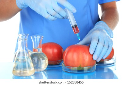 Scientists make injection into fresh red tomato in laboratory