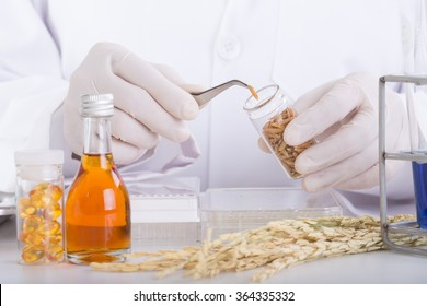 Scientists Research Extraction Rice bran oil In the lab