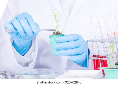 Scientists, research of rice, Rice bran oil in laboratory.