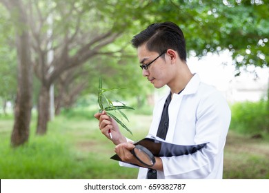 Scientists are shining a magnifying glass to see the plants.