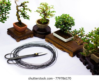 Scissor bonsai and wire bonsai equipment, bonsai tools and bonsai trees of background