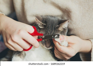 Scissors clipping a gray cat