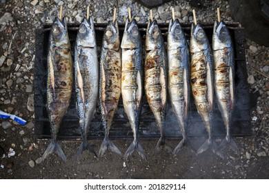 Scomber roast, Mackerel roast, blue mackerel roast, Japanese mackerel roast, Pacific mackerel, slimy mackerel, spotted chub mackerel, Scomber australasicus