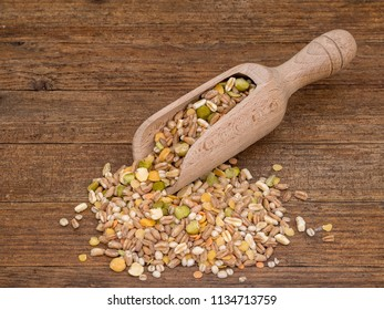 Scoop with assorted grains and pulses, lergumes mix background, top view. Winter food includes split peas, red and yellow lentils, pearl barley, kamut and spelt.