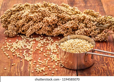scoop of white sorghum grains with clusters of ripe seeds on rustic red wood background