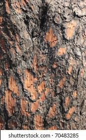 Scorched bark close up, background