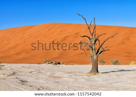 Scorched dead tree in front of red sand dunes shortly after sunrise in Deadvlei, Sossusvlei, Namibia