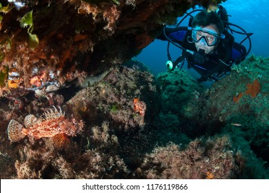 Scorpion fish family and diver.