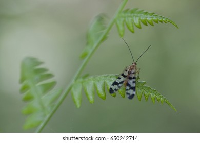 Fly-scorpion Images, Stock Photos & Vectors | Shutterstock