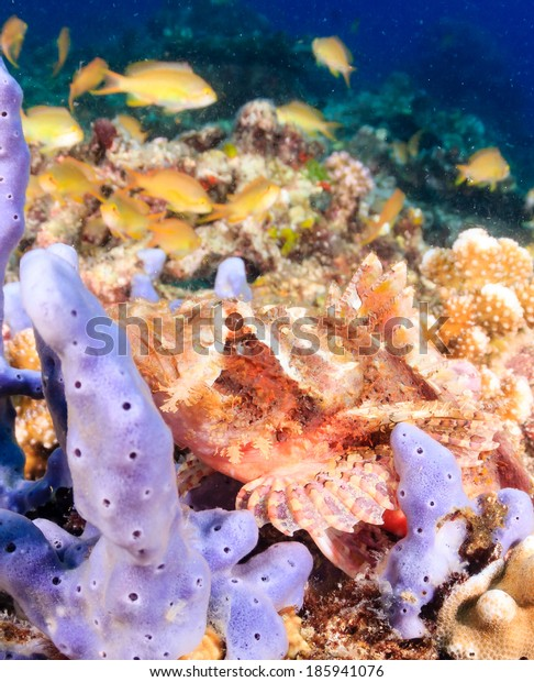 Scorpionfish on a tropical coral reef