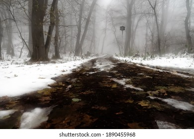 Scotch mist, thick fog hung over muddy forest road and wet snow-covered trees of old forest. Unexpected snowfall in Britain