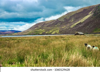 Scotland landscape. Wooden hut in the mountains and grazing sheep in the meadow. Angus, Aberdeenshire, Scotland, UK. Cairngorms, Loch Lee.