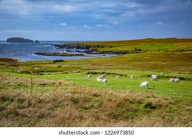 Scotland, Shetland Islands, Beautiful view of island Shetland sheeps