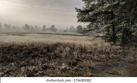 オランダ最大のプッシュモレーヌ複合体であるオランダ・ベルウェ風景に点在するスコット・パインで、サーアリの氷河の砂の堆積によって形成される