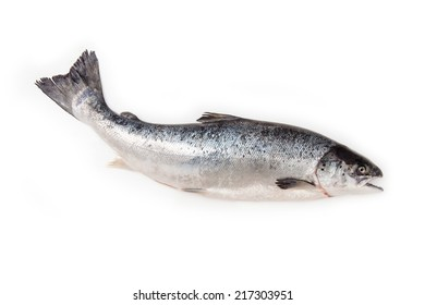 Scottish Atlantic Salmon (Salmo solar) whole fish, isolated on a white studio background.