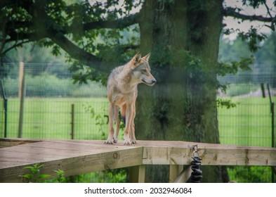 scottish deer centre fife centre