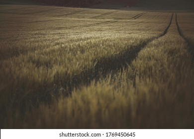Scottish Field - Agriculture - Farm