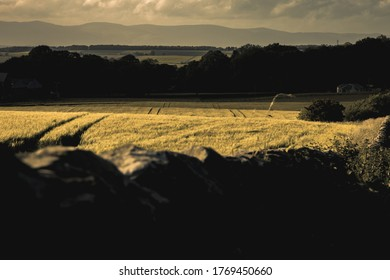 Scottish field - Agriculture - Stone Wall