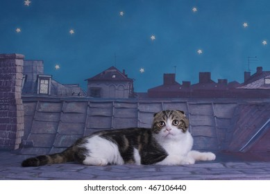 Scottish fold cat lost on the roof