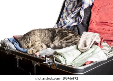 Scottish Fold cat sleeping in a suitcase packed with things for travel on white background