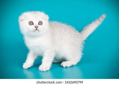 Imágenes, fotos de stock y vectores sobre Gatos Blancos