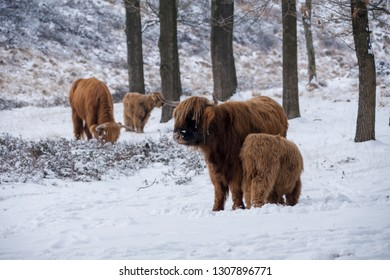 Scottish highlander family