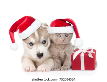 Scottish kitten and Siberian Husky puppy with santa hats and gift box. isolated on white background