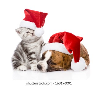 Scottish kitten and small puppy with santa hat. isolated on white background