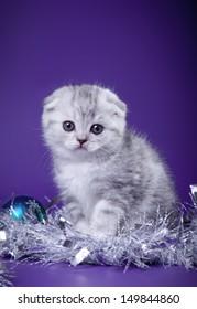 Scottish kittens cat