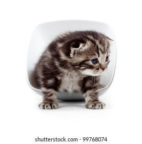 Scottish little kitten sitting in cup isolated on white