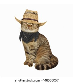 Scottish Straight cat in cowboy hat and scarf on white background