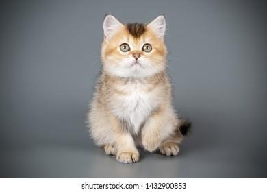 Cute Kitten Sitting Inside Pink Blanket Cat Paws Pet Family Meow Tshirt