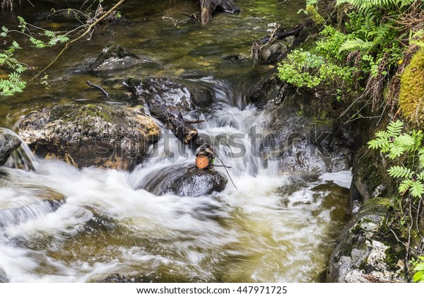 Scottish stream in the Trossachs flowing over stones and broken tree branch