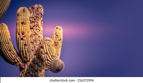 Scottsdale, cactus tree golf balls inside - purple pink background banner