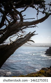 A scraggly, twisted tree at Point Lobos State Natural Reserve in Monterey, California.